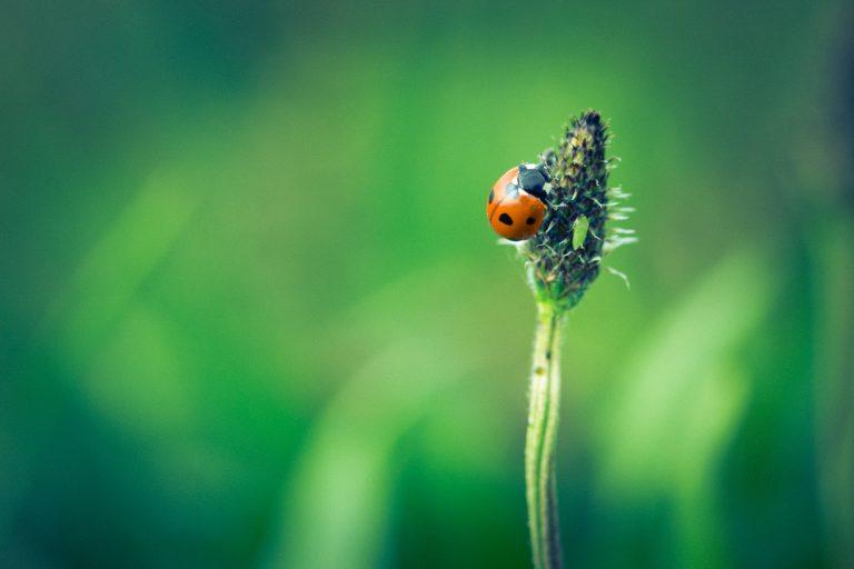 Symbolimme on leppäkerttu. Ehkä ihokin on kuin kovakuoriaisen kuori - poikkeavuus tekee siitä kauniin.